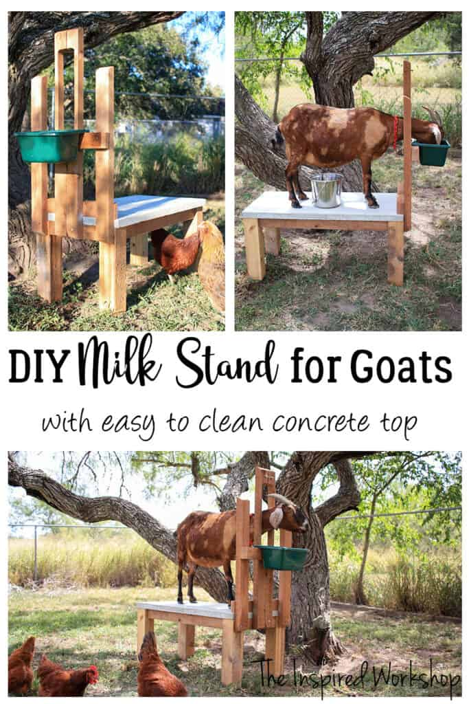 Build Plans for a Milk Stand for Goats
