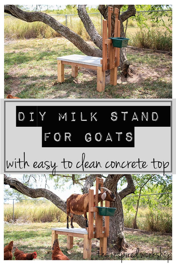 DIY Milk Stand for Goats